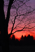Tree silhouetted by purple/pink sunrise