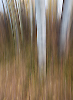 Our tour group spent time experimenting with motion blurs at an aspen grove in Wyoming.