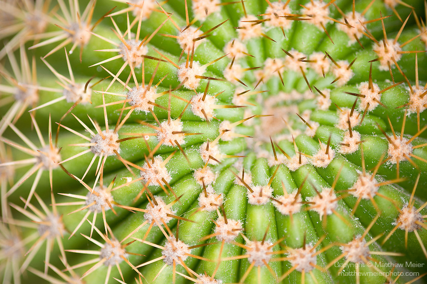 La Jolla, California; detailed view of the spiral pattern created by the cactus spines of a barrel cactus