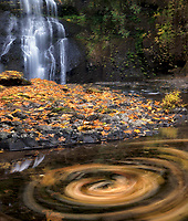Upper North Falls with fall colors and swirling leaves. Silver Falls State Park, Oregon