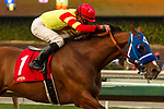 ARCADIA, CA  DECEMBER  30: #1 Silent Bird, ridden by Kent Desormeaux, wins the Midnight Lute Stakes (Grade lll) on December 30, 2017, at Santa Anita Park in Arcadia, CA.(Photo by Casey Phillips/ Eclipse Sportswire/ Getty Images)