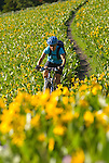 A young woman mountain bikes through a field of wildflowers in Jackson Hole, Wyoming.