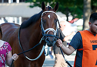 Somelikeithotbrown  in the paddock as Opry (no. 8) wins the With Anticipation  Stakes (Grade 3), Aug. 29, 2018 at the Saratoga Race Course, Saratoga Springs, NY.  Ridden by  Javier Castellano, and trained by Todd Pletcher, Opry finished 1 1/2 lengths in front of Somelikeithotbrown (No. 7).  (Bruce Dudek/Eclipse Sportswire)