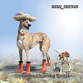 CHIARA,REALISTIC ANIMALS, REALISTISCHE TIERE, ANIMALES REALISTICOS, paintings+++++,USLGCHI540,#A#, EVERYDAY ,photos