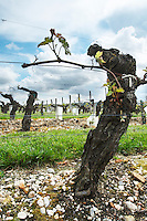 merlot 35 year old vine sandy gravelly soil chateau la garde pessac leognan graves bordeaux france