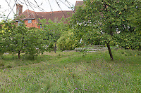 Wildflowers grow around the trees in the orchard at Great Dixter