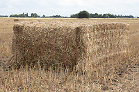 24.7.2020 Linseed Straw Bale<br /> ©Tim Scrivener Photographer 07850 303986<br />      ....Covering Agriculture In The UK.