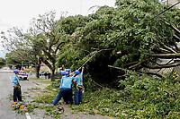 CURITIBA, PR, 26.04.2017 - CLIMA-PR –  Forte chuva com ventos de mais de 70Km/h que atingiram a cidade de Curitiba (PR) na manhã desta quarta-feira (26), causou queda de árvores pelas ruas da cidade. Na foto, queda de árvore na Rua Julia da Costa. (Foto: Paulo Lisboa/Brazil Photo Press)