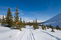 Trail in the White Mountains National Recreation Area, Interior, Alaska