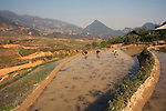 Workers in rice paddy, Sapa, Northern Vietnam