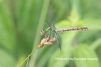 06468-00107 Westfall's Snaketail (Ophiogomphus westfalli) Centerville Slough fen Reynolds Co. MO
