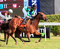 Scenes from Saratoga Racecourse, Sept. 4.   Bareeqa (No. 7) wins race eight.  Ridden by Jose Lezcano and trained by Danny Gargan.  (Bruce Dudek/Eclipse Sportswire)