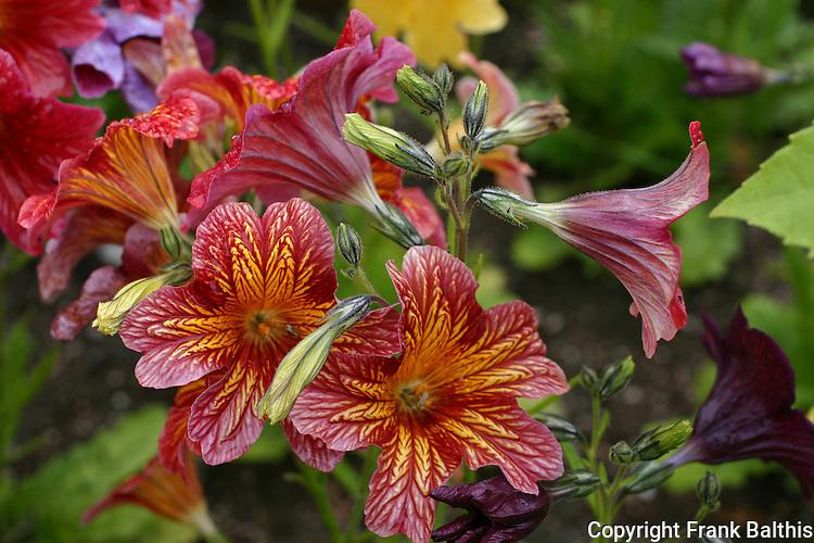 flower in Palmer garden