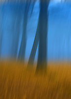 Abstract of Felbrigg Woods in winter, Norfolk, UK
