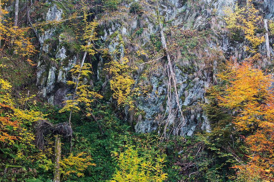 Cliff vegetation in fall colours at the border of Tarcu Mountains Natura 2000 site. Southern Carpathians, Munții Ṭarcu, Caraș-Severin, Romania.