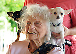 Kesii Mackaye, age 101,of Rosenberg, is amused by a visit from Ben and Spirit, two Chihuahua dogs owned by Jesse Scherer, during the Rosendale Earthfest, at the Rosendale Recreation Center in Rosendale, NY, on Sunday, June 9, 2013. Photo by Jim Peppler. Copyright Jim Peppler 2013 all rights reserved.