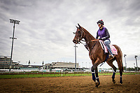 LOUISVILLE, KY - MAY 03: Tequilita walks off the track at Churchill Downs on May 03, 2017 in Louisville, Kentucky. (Photo by Alex Evers/Eclipse Sportswire/Getty Images)
