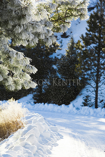 Winter scene on a rural Montana road with ice crystals falling from the frost covered trees