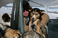 Monday March 12, 2007   ----   Iditarod Pilot Greg Niesen loads a dropped dog at Kaltag for a fligh to Unalakleet.