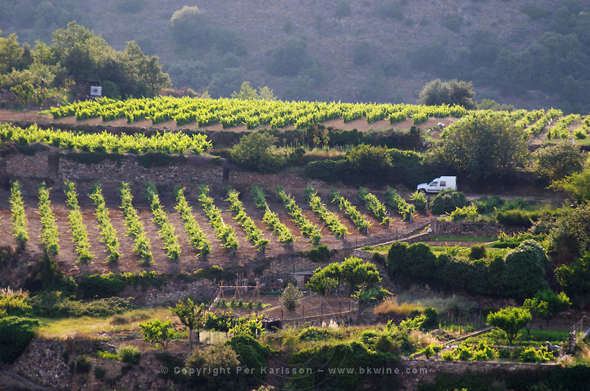 Vineyard. Caramany, Ariege, Roussillon, France