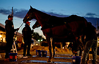 LOUISVILLE, KENTUCKY - May 02: A horse gets a bath at sunrise during Kentucky Derby and Oaks preparations at Churchill Downs on April 30, 2017 in Louisville, Kentucky. (Photo by Scott Serio/Eclipse Sportswire/Getty Images)