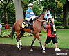 Steady N Love before The Tax Free Shopping Distaff on Owners Day at Delaware Park on 9/13/14