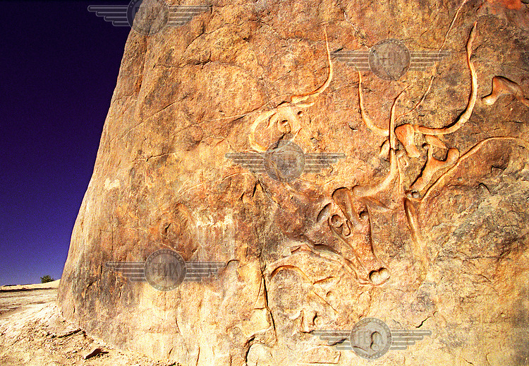 photo: Sven Torfinn.Algeria, desert of South Algeria, March 2002.rock art, encravings,  rock paintings, culture, art, history, prehistoric depictions, images of cows with horns, cattle, animals..this particular encraving is called 'the crying cow' because one of the cows has a tear in it's eye.