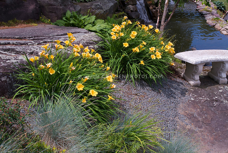 Hemerocallis Stella d'Oro clumps of daylily in yellow gold blooms, stone garden bench, ornamental grass festuca, daylilies, water stream garden next to rock outcroppings