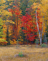 Vilas County, WI<br /> Mixed hardwood and evergreen forest in fall color at the edge of a marsh near Lone Tree Lake - <br /> Northern Highland American Legion State Forest