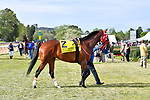 HOT SPRINGS, AR - APRIL 14:Count Fleet Sprint Handicap. Oaklawn Park on April 14, 2018 in Hot Springs,Arkansas. #2 Wings Locked Up  (Photo by Ted McClenning/Eclipse Sportswire/Getty Images)
