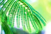 green fern with abundant light streaming through a dreamy  bokeh background