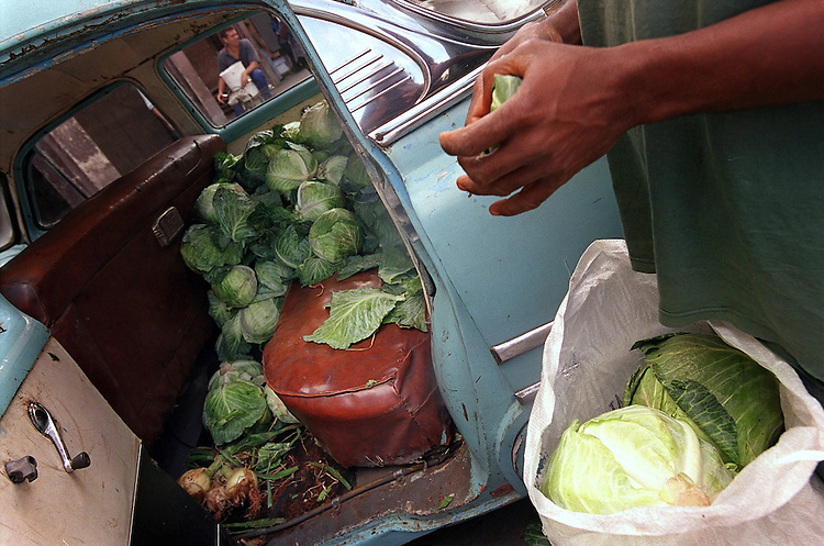 Driven by Necessity-Cabbages- Angel Acosta Estopinan uses the back seat of his 1953 Chevy to haul cabbages to markets and restaurants in Havana.