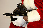 Santa Claus holding two black bunny rabbits in a cowboy hat