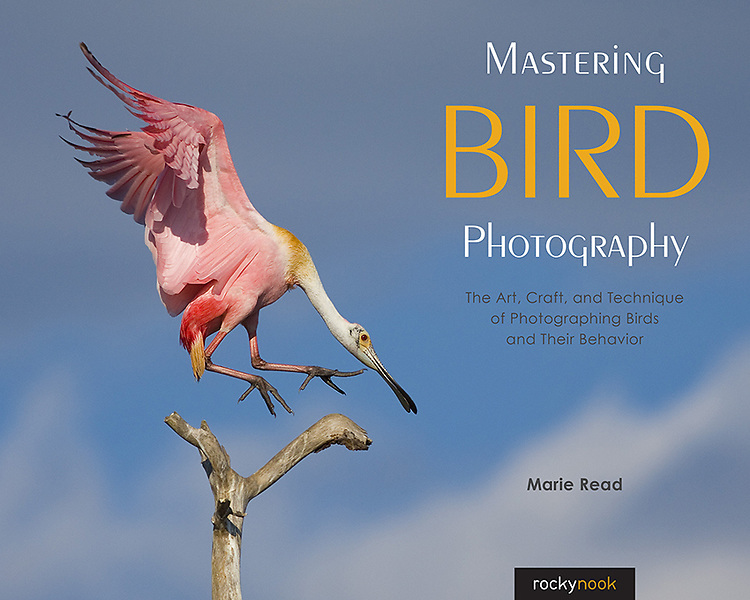 To order from Rock Nook, click the link:<br /> https://rockynook.com/shop/photography/mastering-bird-photography/?REF=101/
