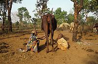 Breeder children keepiny away Ticks from a cow