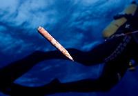 20061101 INTERNATIONAL WATERS : CENTRAL NORTH PACIFIC OCEAN  A marker pen encrusted in bryozoan floats past a Greenpeace diver during an underwater search for trash in the high seas of the Central North Pacific Ocean, Wednesday November 1st 2006. Greenpeace are highlighting the threat that plastic poses to the world's oceans.<br /> ALEX HOFFORD