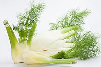 Fenchel, Knollen-Fenchel, Gemüse-Fenchel, Knollenfenchel, Gemüsefenchel, Knolle, Knollen, Fenchelknolle, Foeniculum vulgare var. azoricum, Fennel, sweet fennel, Florence fennel, finocchio, bulb, Florence fennel bulbs