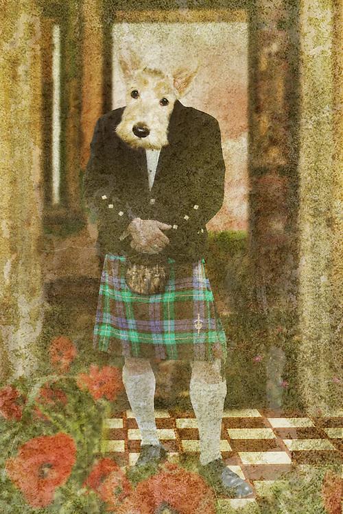 scottie dog in a kilt