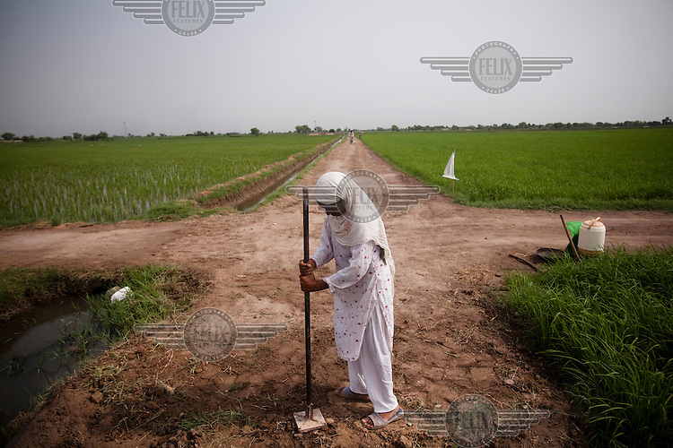 A woman compacts the surface during construction of a dirt road as part of a 'cash for work' program.