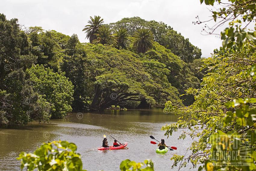 Kayaking the Anahulu River near Anahulu Bridge, Haleiwa, North Shore of Oahu