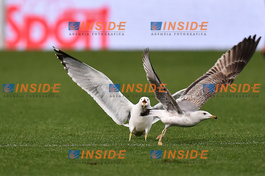 Gabbiani Seagulls <br /> Roma 19-03-2017 Stadio Olimpico Football Calcio Serie A 2016/2017 AS Roma - Sassuolo Foto Andrea Staccioli / Insidefoto