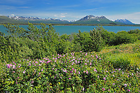Deasadeash Lake<br /> near Haines Junction<br /> Yukon<br /> Canada