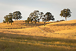 Hills and trees, fences and roads in rural Amador County, Calif.