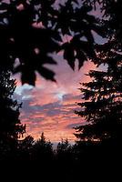 Canadian Evening