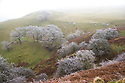 27/01/17<br /> <br /> Hoar frost clings to trees near Blue John Cavern on  Mam Tor near near Castleton in the Derbyshire Peak District this morning.<br /> <br /> All Rights Reserved F Stop Press Ltd. (0)1773 550665 www.fstoppress.com