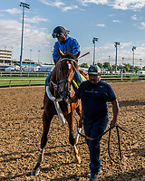 LOUISVILLE, KENTUCKY - MAY 01: Irap, owned by Reddam Racing LLC and trained by Doug O'Neill, exercises in preparation for the Kentucky Derby  at Churchill Downs on May 1, 2017 in Louisville, Kentucky. (Photo by Jesse Caris/Eclipse Sportswire/Getty Images)
