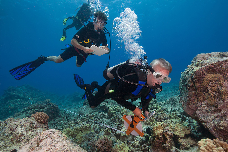 Research divers (MR) extend a transit line to begin a species count.  In the future, data from here will help to determine the health of Hawaii's reefs. Hawaii.