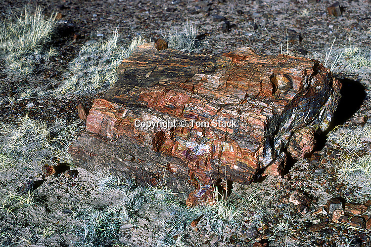 Petrified Wood, Petrified Forest N.P., Arizona