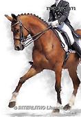 Marcello, REALISTIC ANIMALS, REALISTISCHE TIERE, ANIMALES REALISTICOS, paintings+++++,ITMCEDC1071,#A# ,horse,rider,horsemen