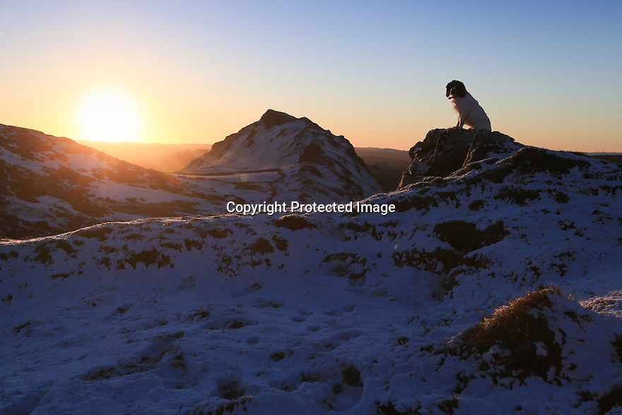 15/01/16<br /> <br /> Springer spaniel, Chester, (15 months) watches the sunrise.<br /> <br /> After a dusting of snow and sub-zero overnight temperatures, dawn breaks over Chrome Hill in the upper Dove Valley in the Derbyshire Peak District.<br /> <br /> All Rights Reserved: F Stop Press Ltd. +44(0)1335 418365   www.fstoppress.com.